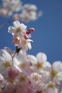 http://www.vantech.jp/shops/aichi/assets_c/2011/03/1124-thumb-200x300-101.jpg