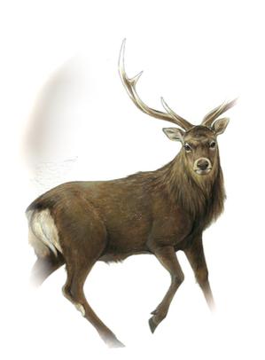 鹿!.png